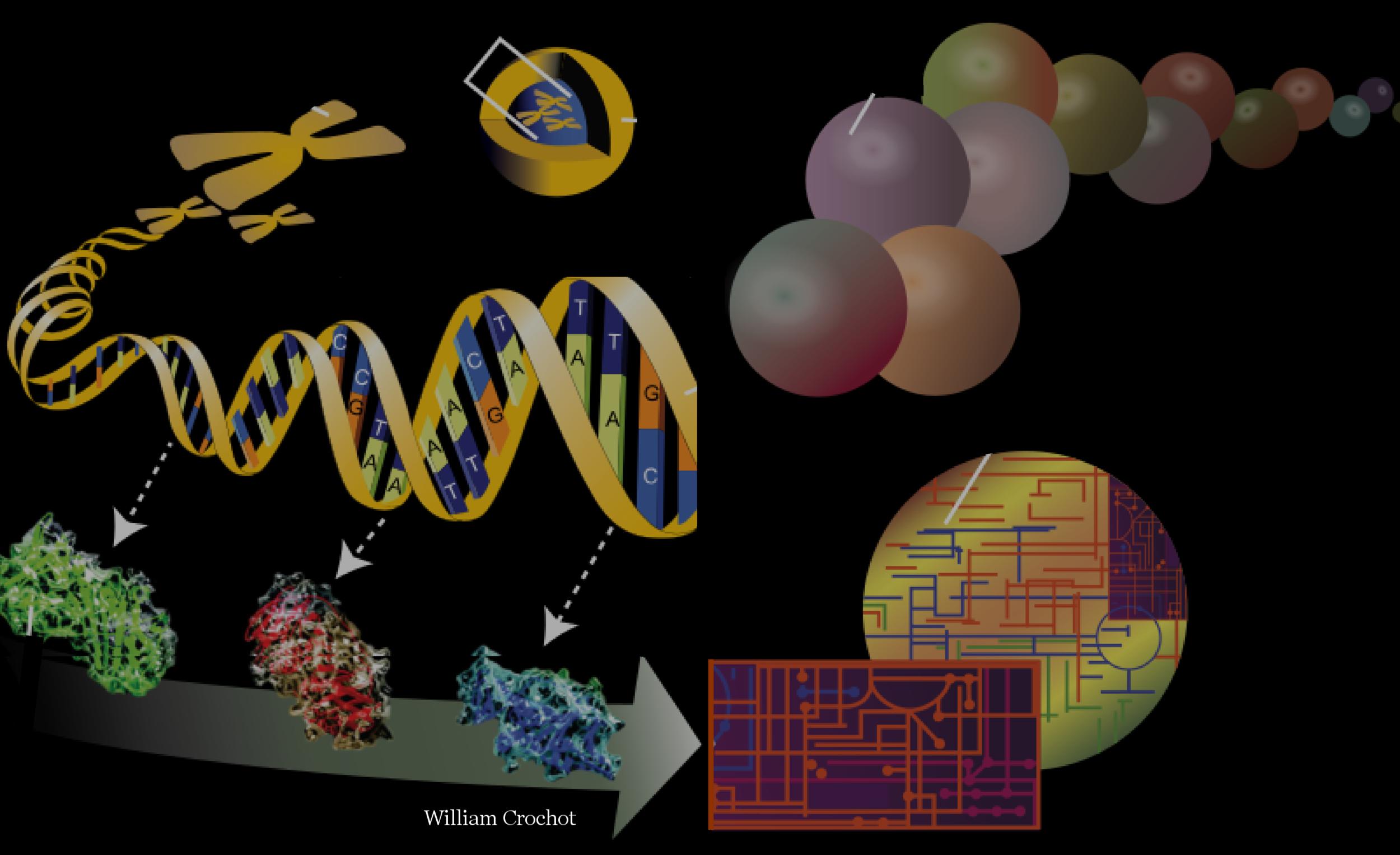 chromatin and epigenesis -