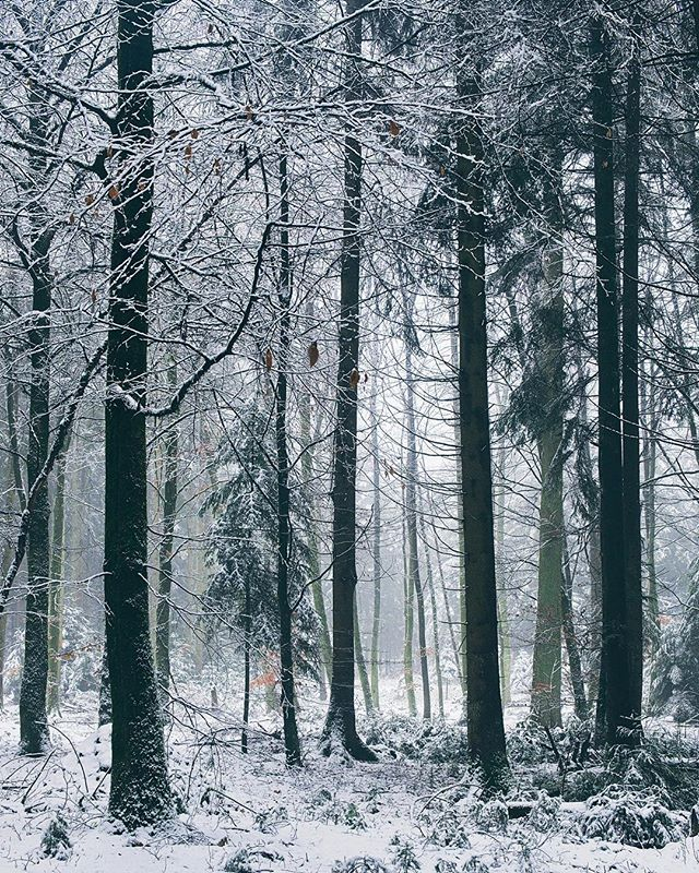 Winterwald  _ _ #woods #snow #forest #landscape #switzerland #schweiz #february #photography #fujifilm #xt2 #xf1855 #nature #cold #winter #calm #peaceful