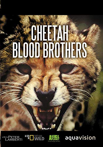 Cheetahs Blood Brothers.jpg