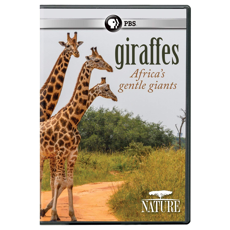 Giraffes Gentle Giants.jpg