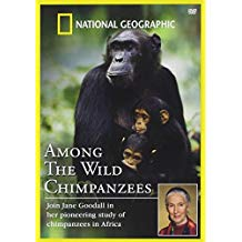 Among the Wild Chimpanzees.jpg