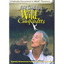 Jane Goodalls Wild Chimpanzees.jpg