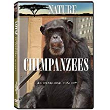 Nature Chimpanzee.jpg