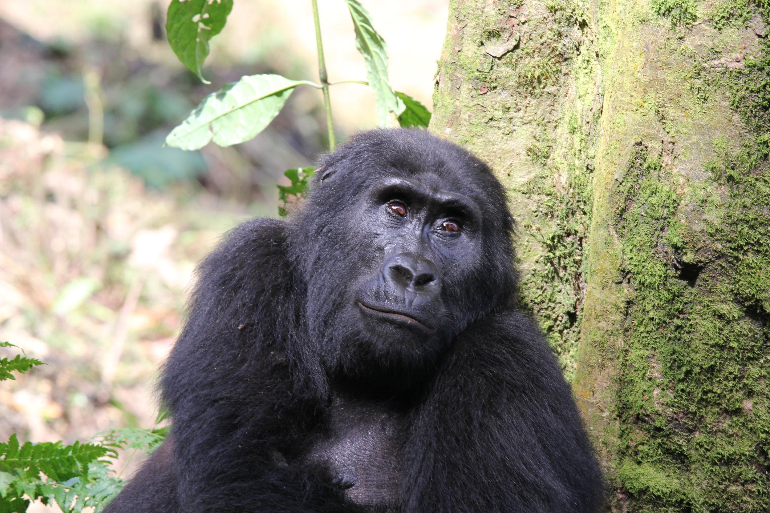 Kibale chimp trek_Lyndsay harshman photo.JPG