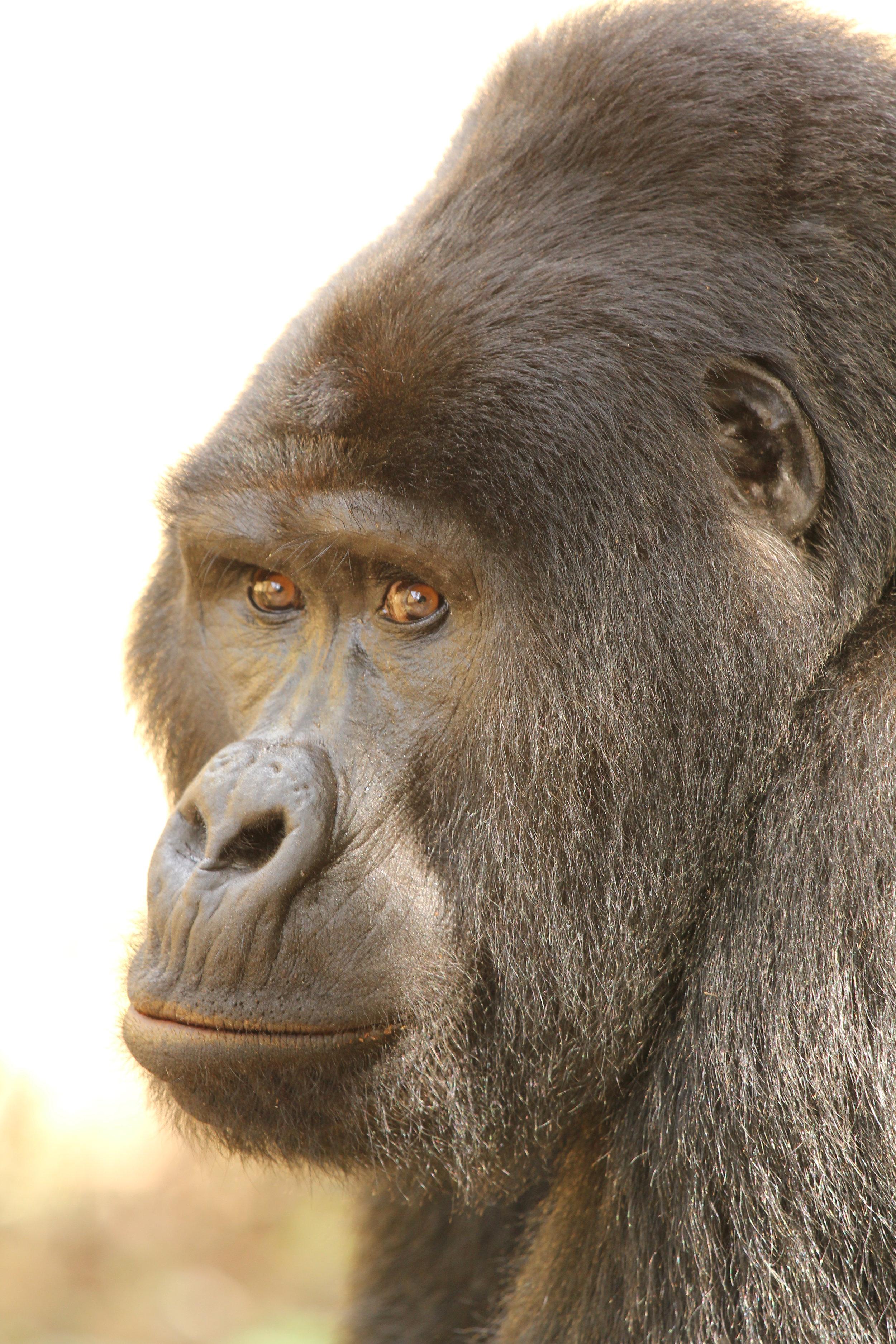Nkuringo Gorilla trek_lyndsay harshman photo (2).JPG