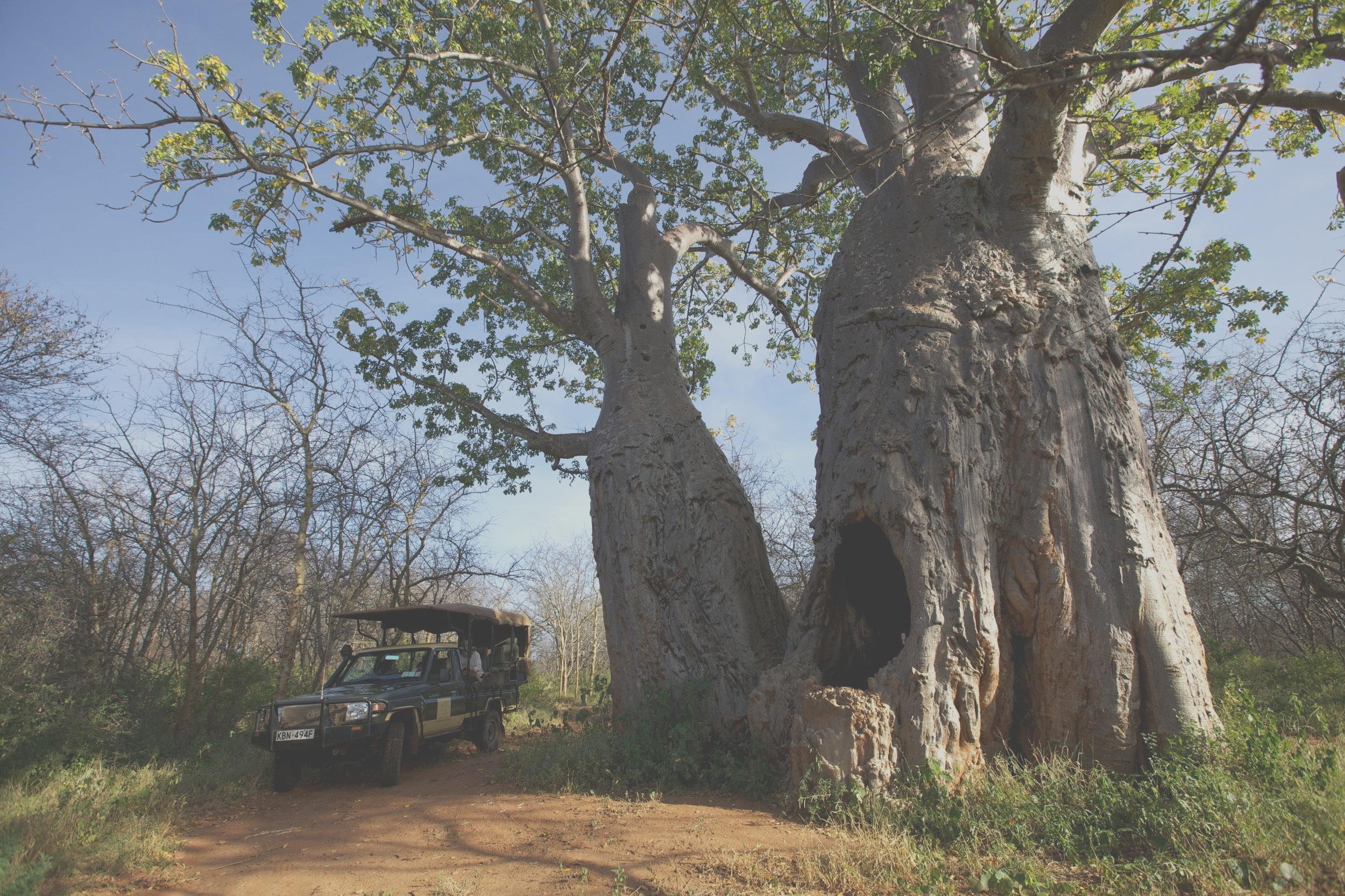 Meru National Park - Image Credit: Elewana Collection, Elsja's Kopje