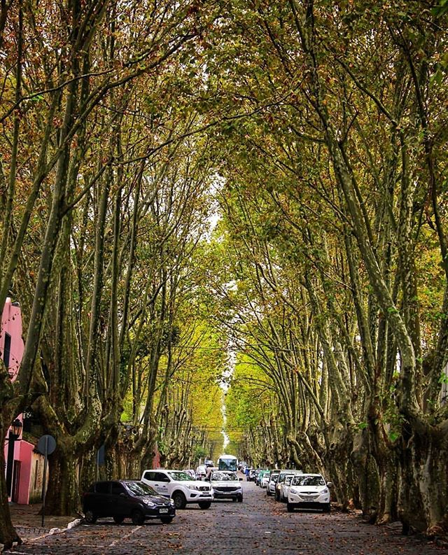 Our beautiful city of Colonia del Sacramento. This is how it feels walking down the streets @coloniadelsacramentouy #uruguay 📷 by: @descubre_uruguay thanks for sharing 💝