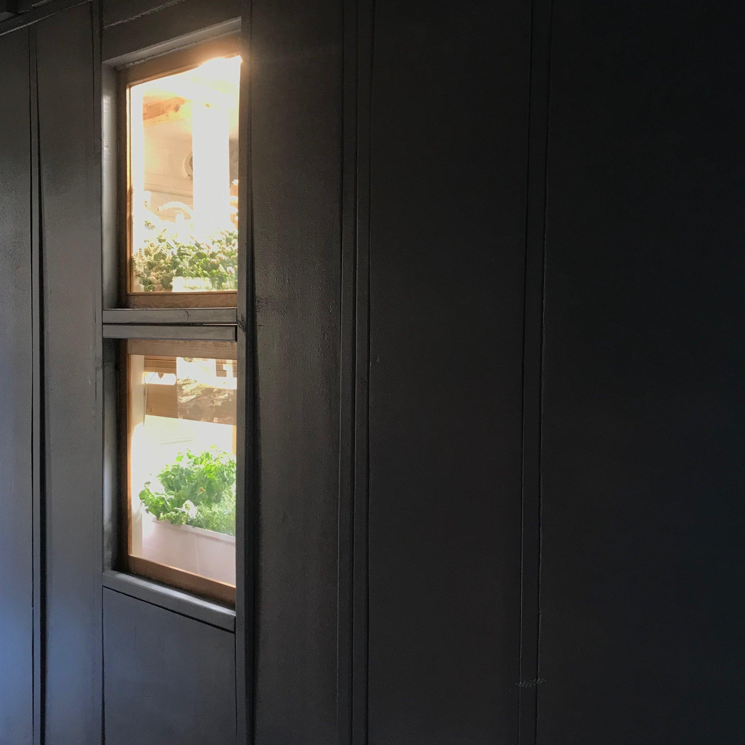MAU Alpha window.jpg