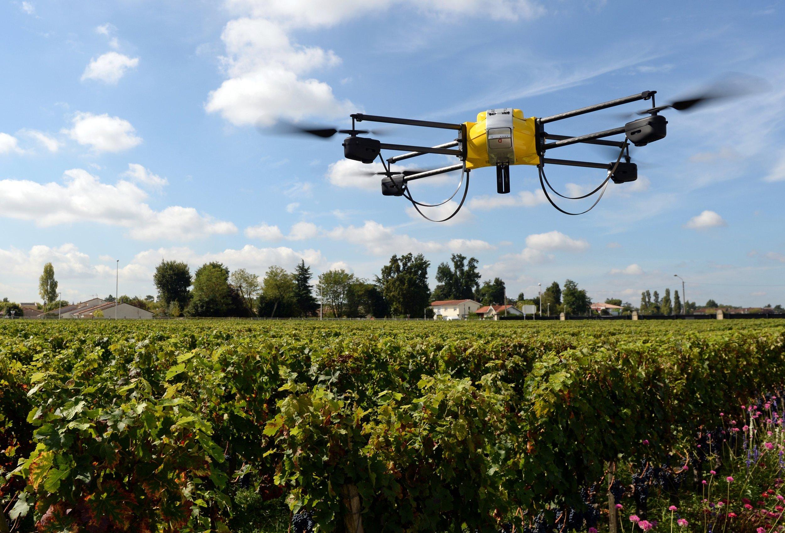 drones_vines.jpeg