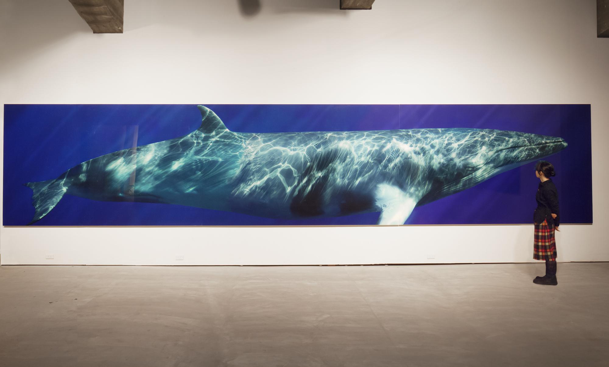 Minke Whale Composite I, 2009