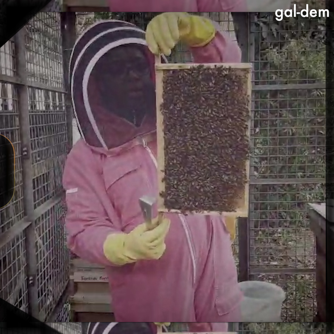 Print #3: Secret life of a black beekeeper  GAL-DEM  director & editor