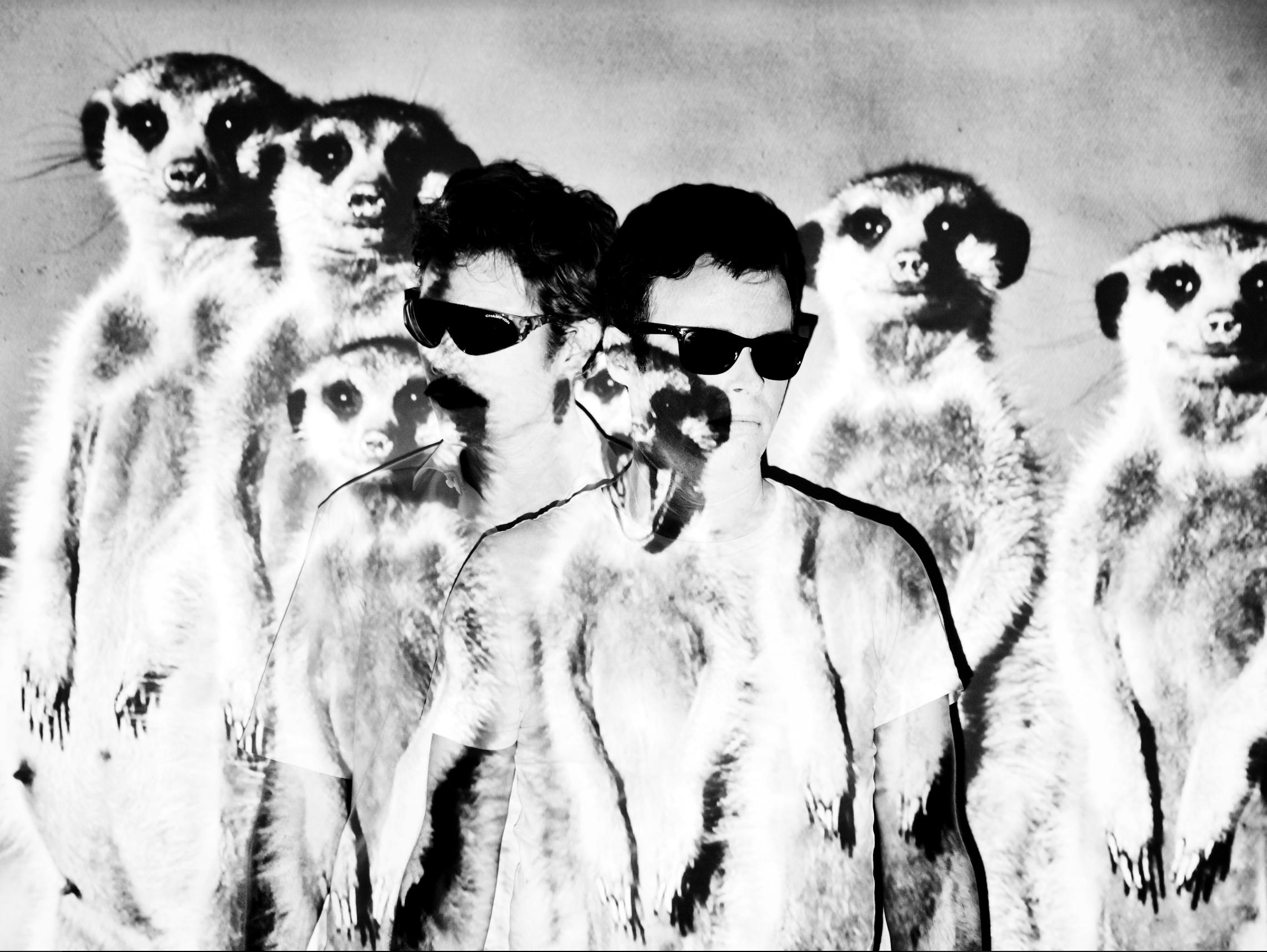 - @Meerkat.meerkat
