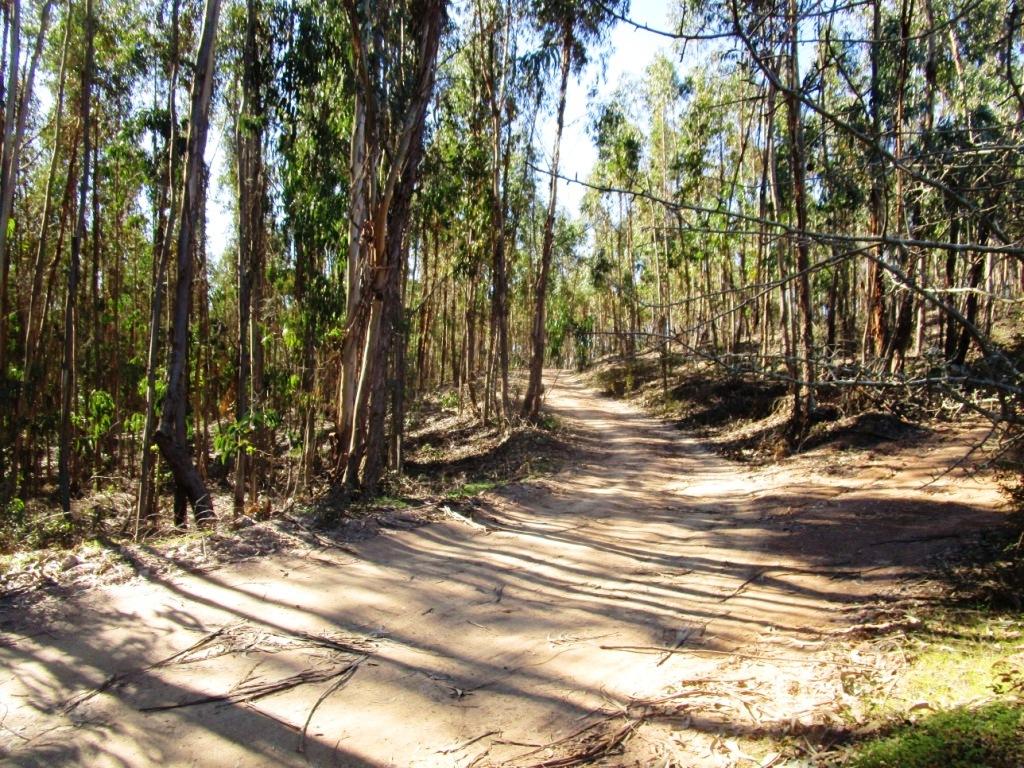 Eukalyptus-Monokultur Feb 2018 ….