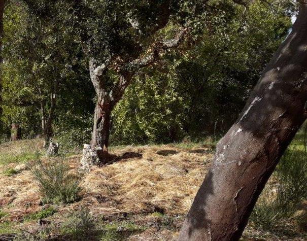 `ne Decke aus Grasmulch für die Eiche