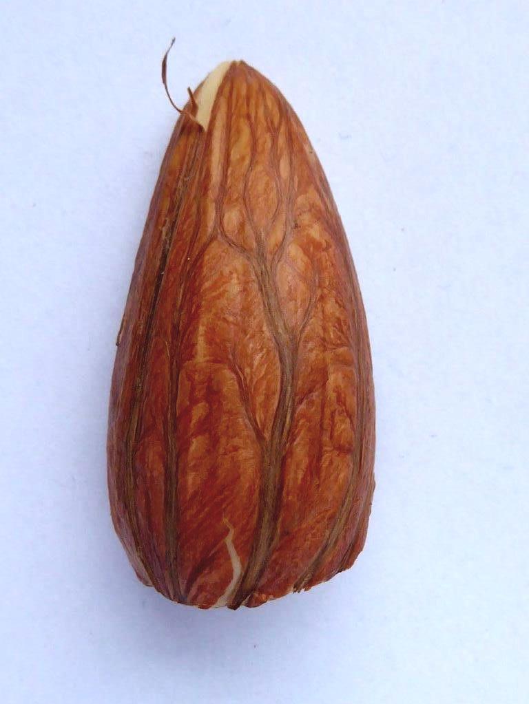 Vorzeichen: was aus dem Samen wird