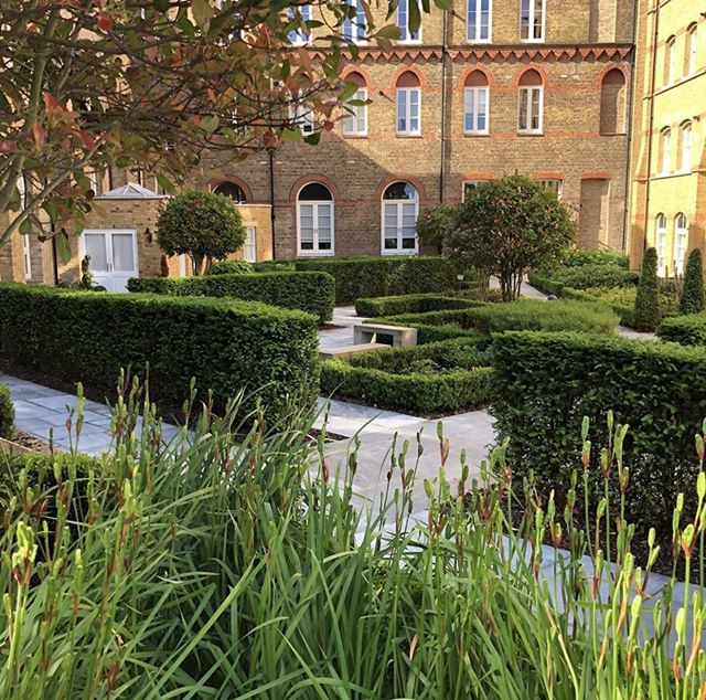 A nice court yard at st Joseph's Mill Hill, designed by myself and plants supplied by folia for the Berkeley Group.