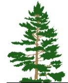 treeOnly_logo.jpg