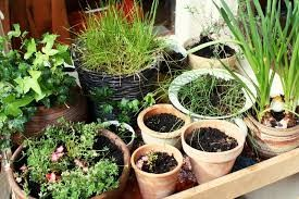 Container - Container gardens are good for areas with less space and can be done indoor and out. Any kind of container can be used, whether it is a normal terra cotta pot, a tire, an old glass bottle or even a shoe.