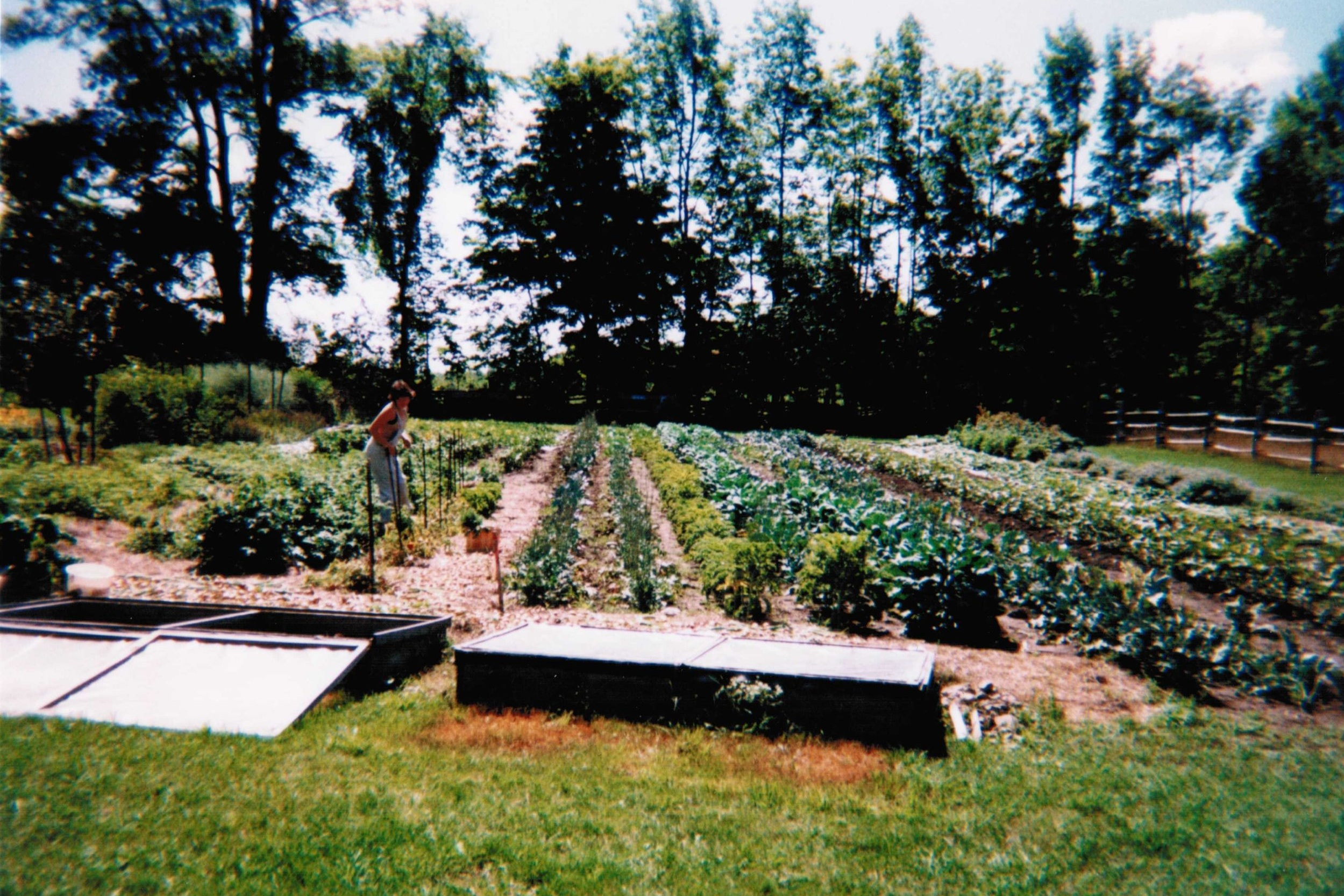 In-Ground - This style of garden uses the ground soil to grow plants. Depending on your soil quality, you may need to amend it with compost and organic matter. This can often be the most economical choice if you have the space for it.