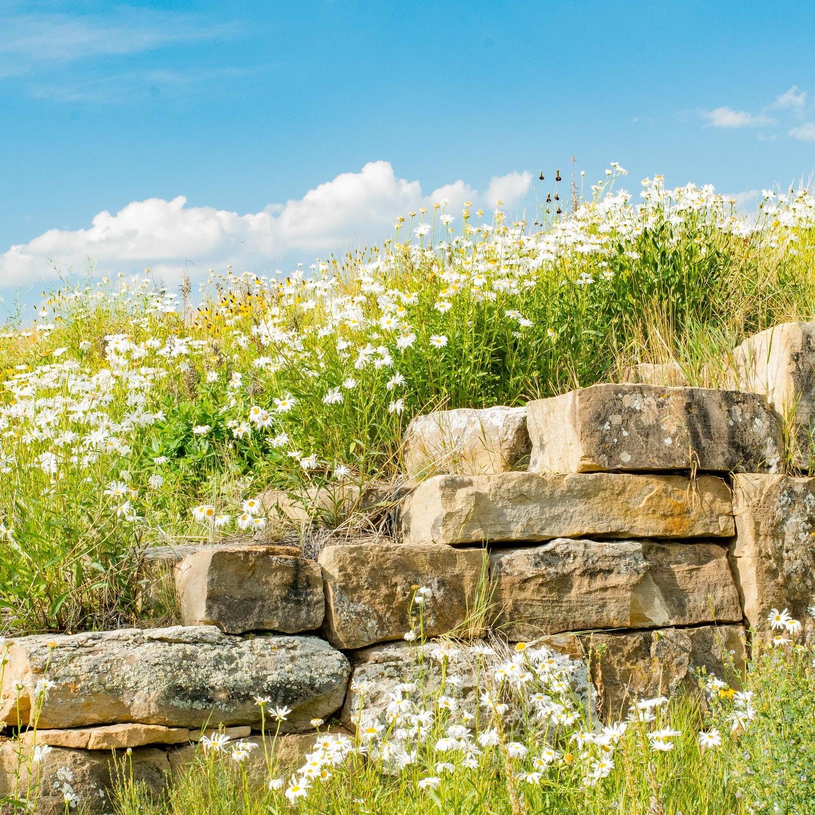 Aspen Landscape Construction