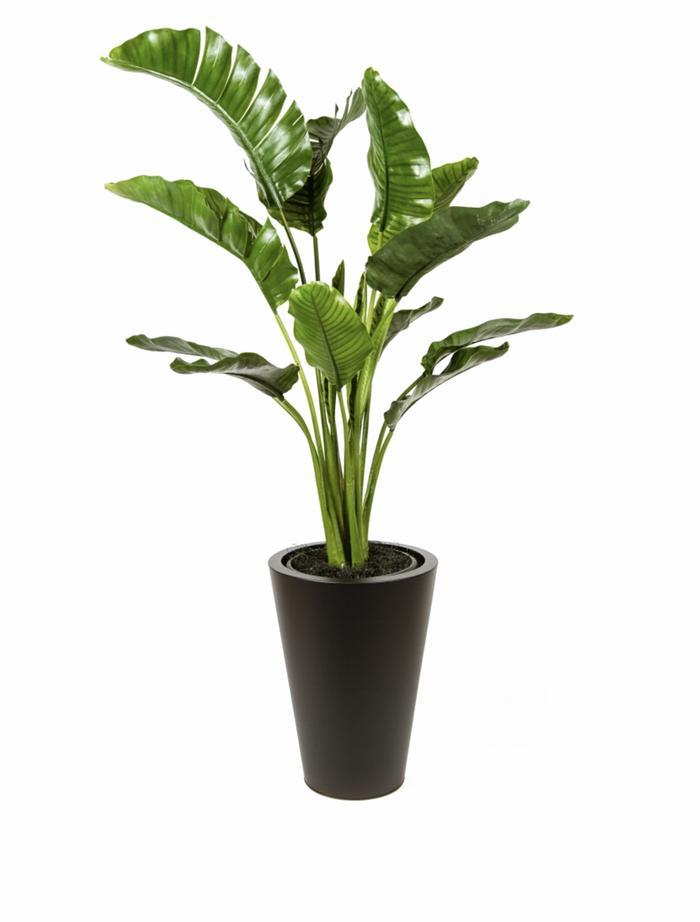 plant_700x.jpg