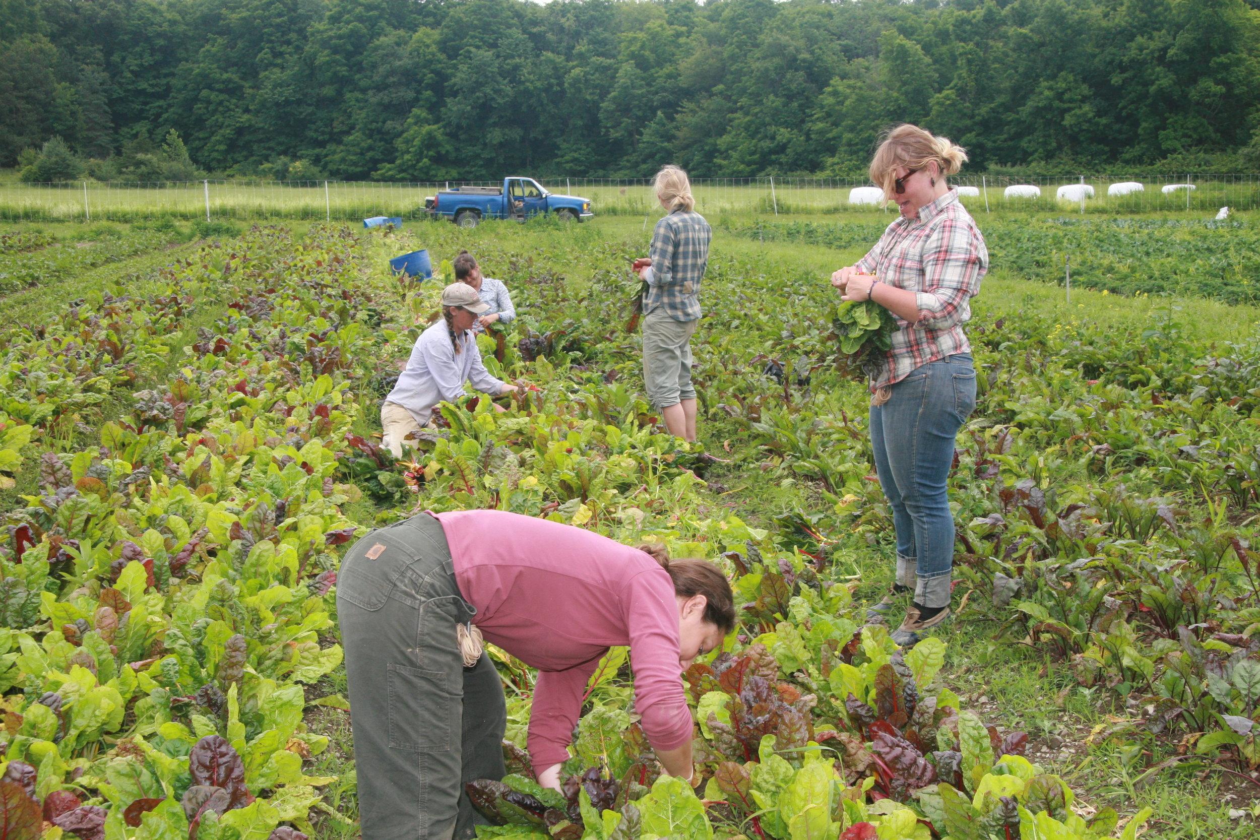 Harvesting Summer 2012 (42).JPG