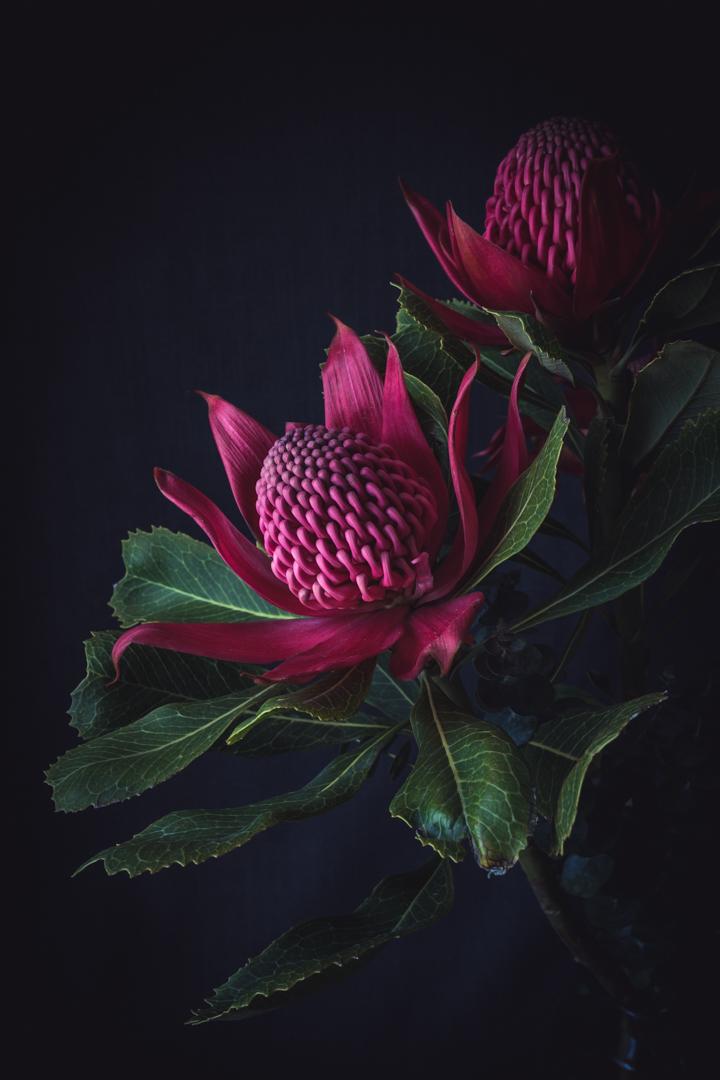 Australian native flora (2 of 15).JPG