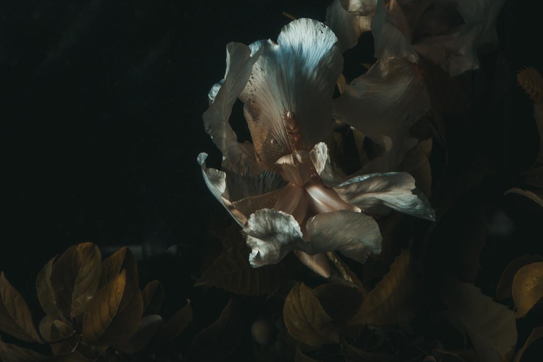 Underwater Iris  (2 of 3).JPG