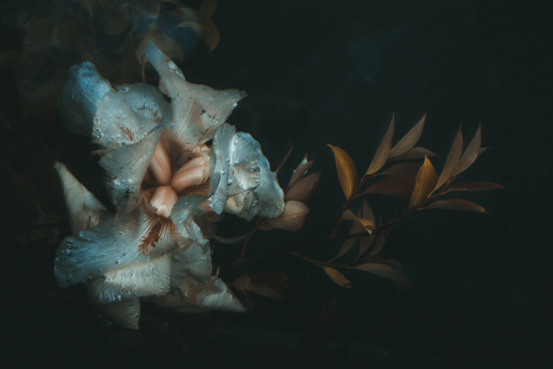 Underwater Iris v3 (1 of 4).JPG