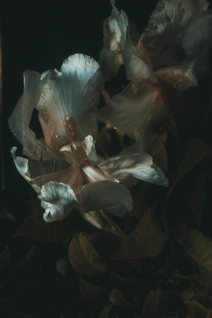 Underwater Iris  (1 of 3).JPG