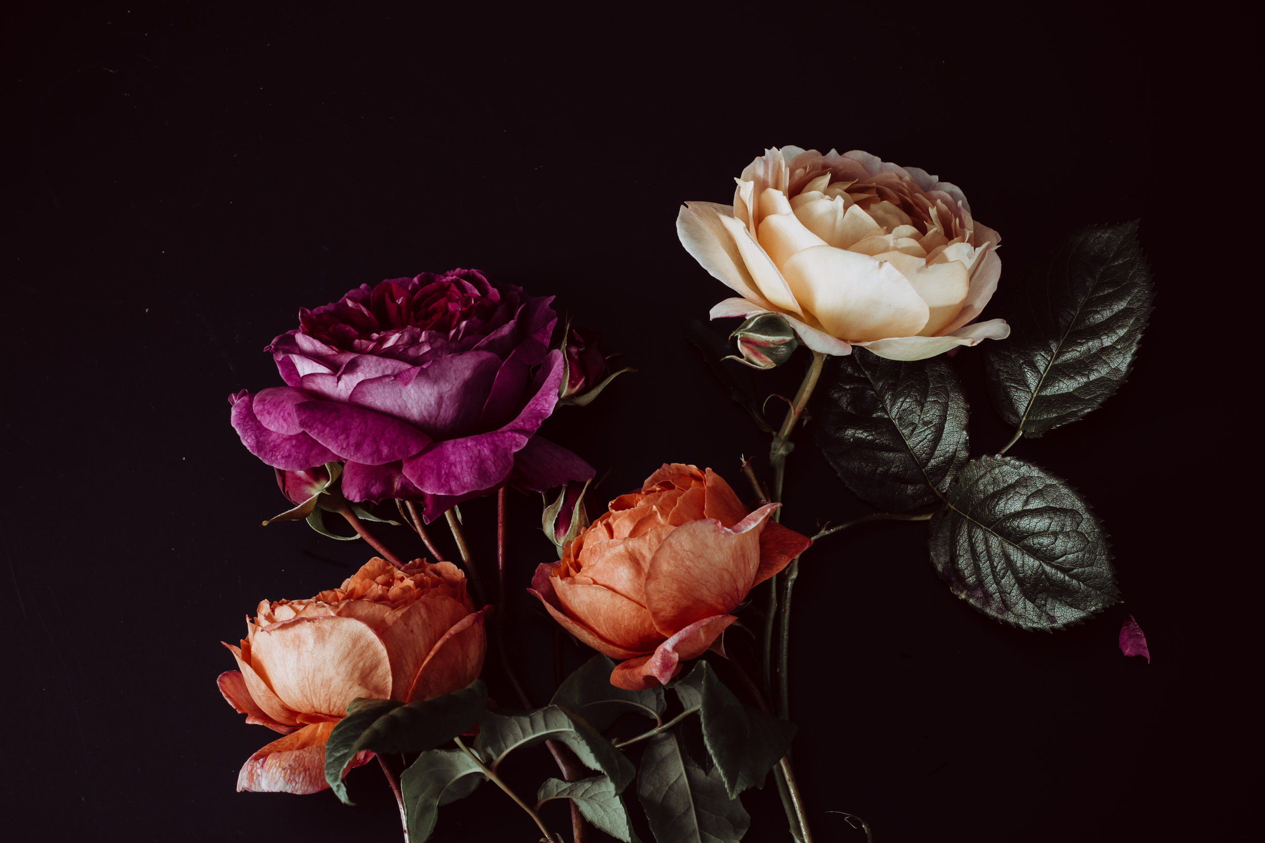 moody colourful roses (21 of 39).jpg