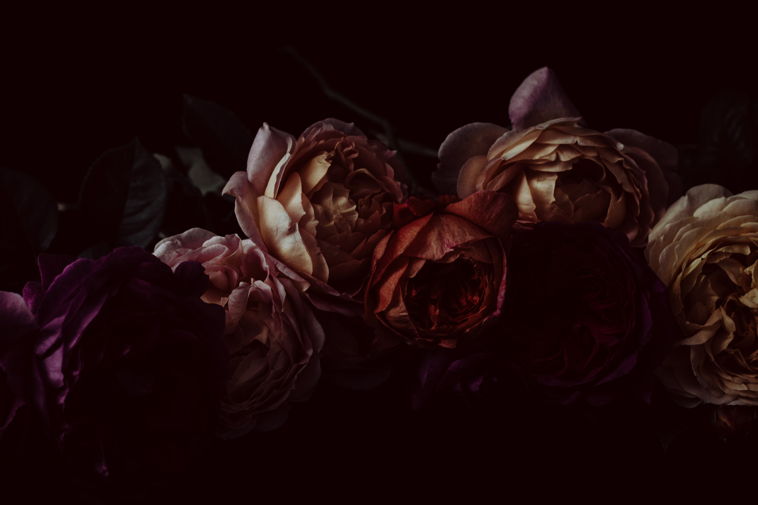 moody colourful roses (38 of 39).jpg
