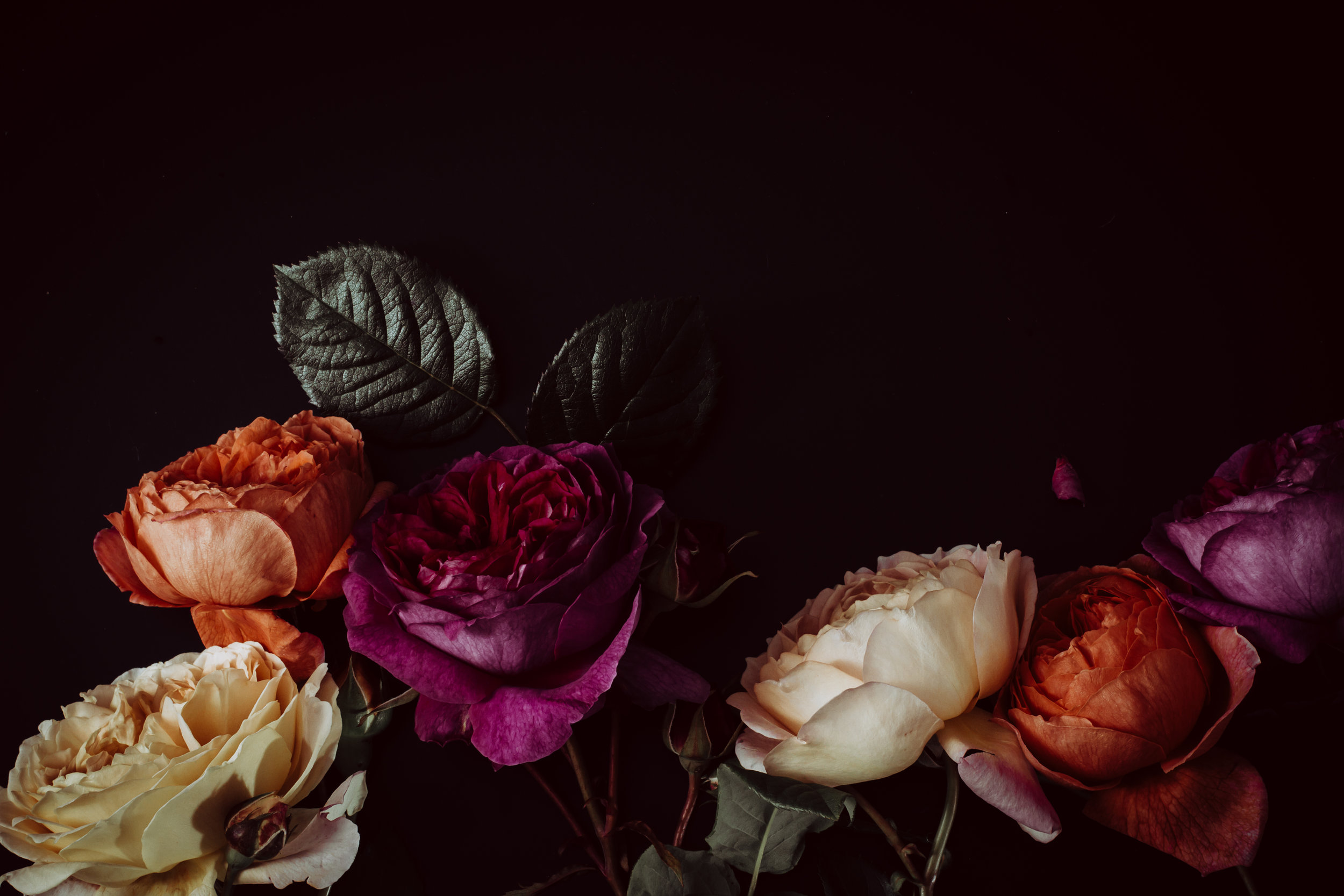 moody colourful roses (23 of 39).jpg