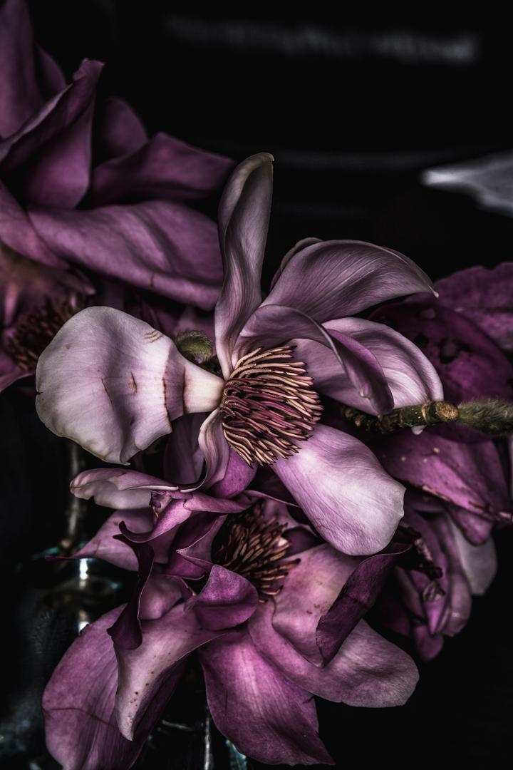 Broken magnolia (3 of 7).JPG