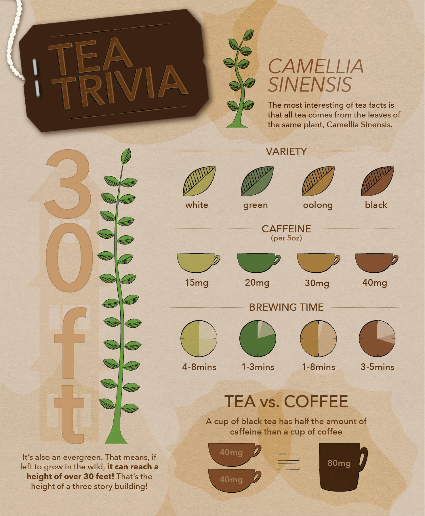 Infographic-Tea.png