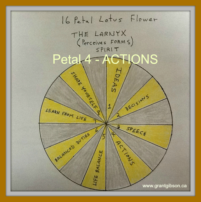 the-lotus-flower-actions.jpg