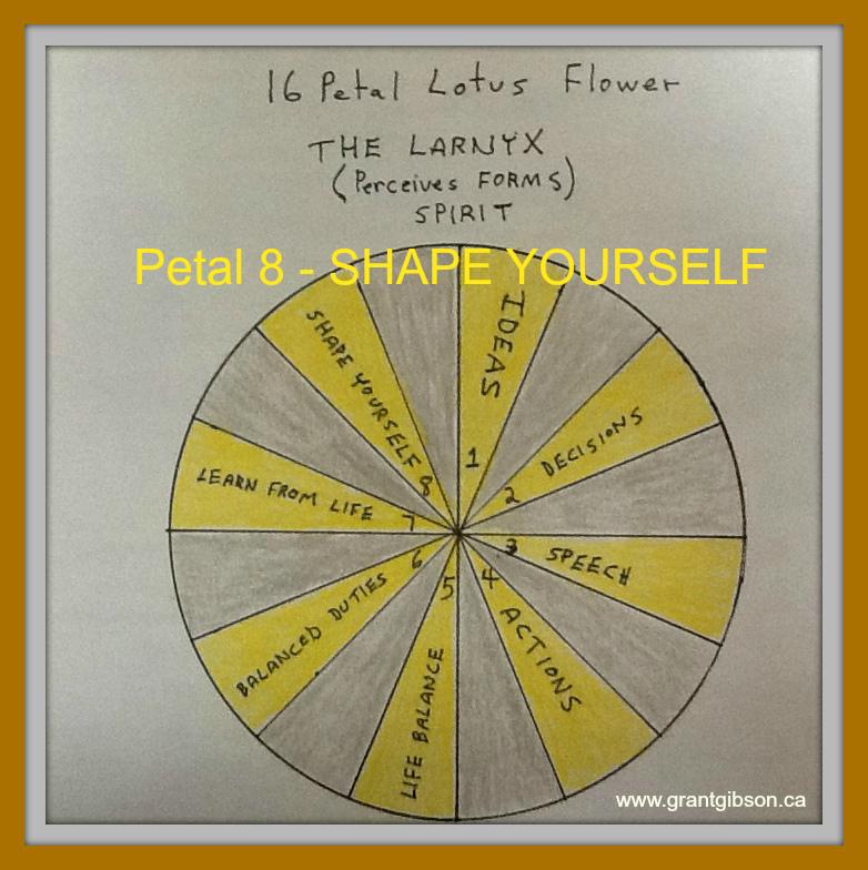 the-lotus-flower-petal-8-shape-yourslef.jpg