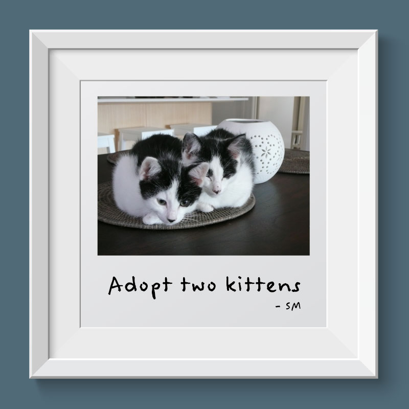 Goal - Adopt two kittens