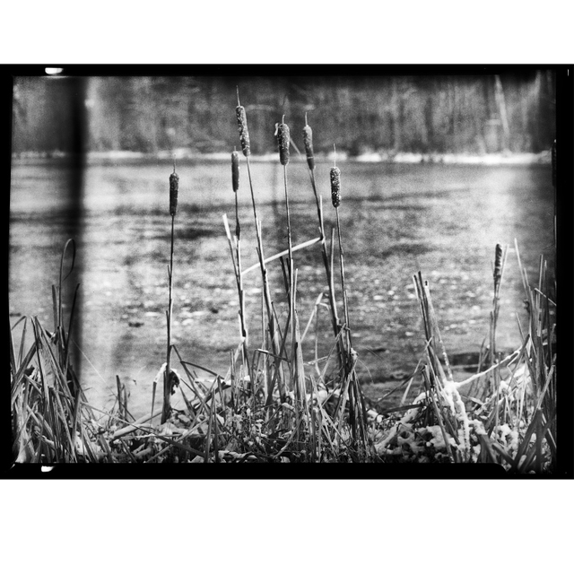20171210_Pond_Reeds_HP5_1_RGB_insta.jpg