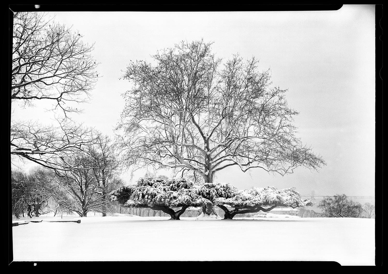 20180321_Rockefeller_Tree_HP5_Ilfo3_WET_1_RGB_SHARP.jpg