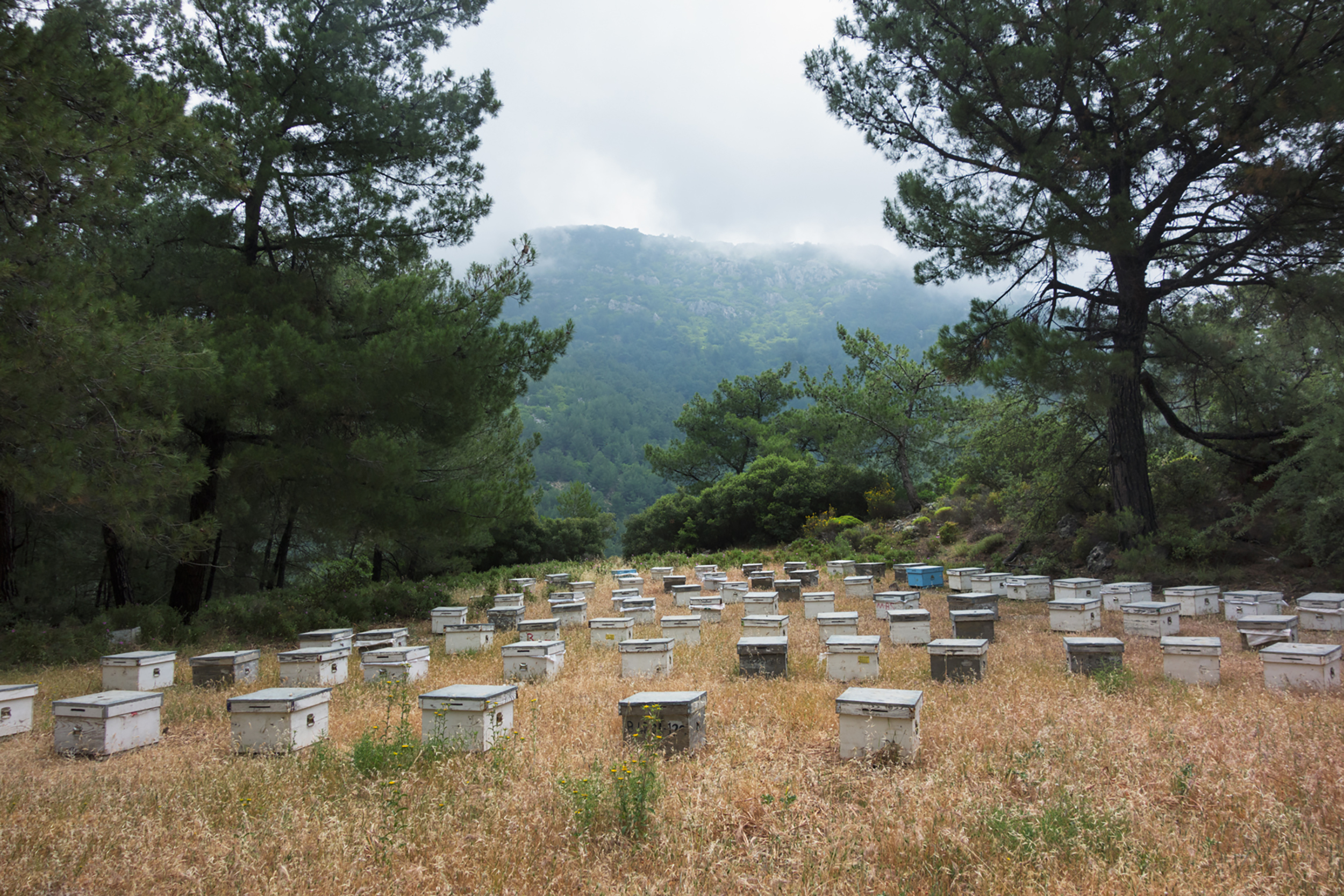 BEE HIVES, 2018