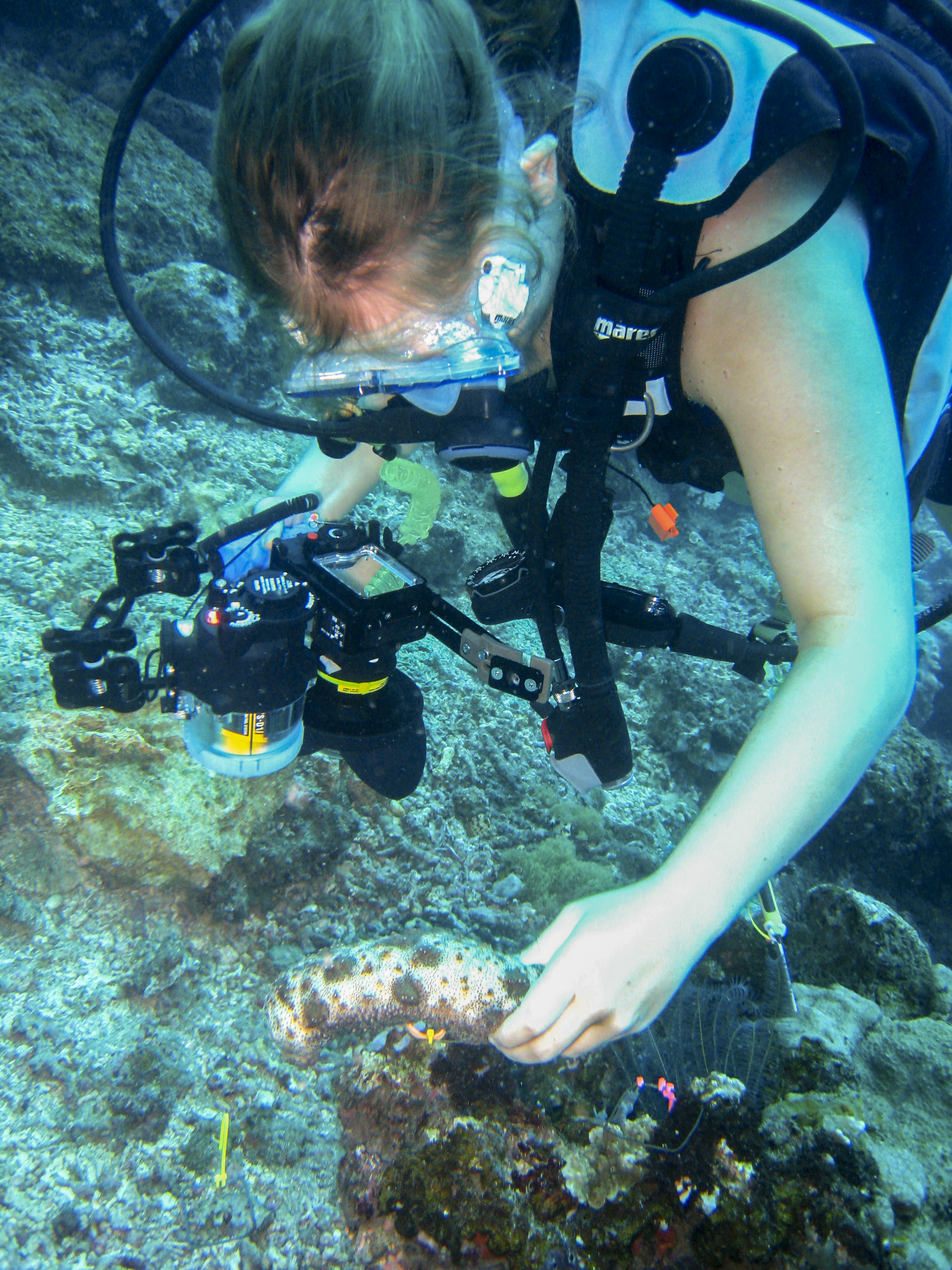 Leah conducting research on Sea Cucumbers in the Phillipines