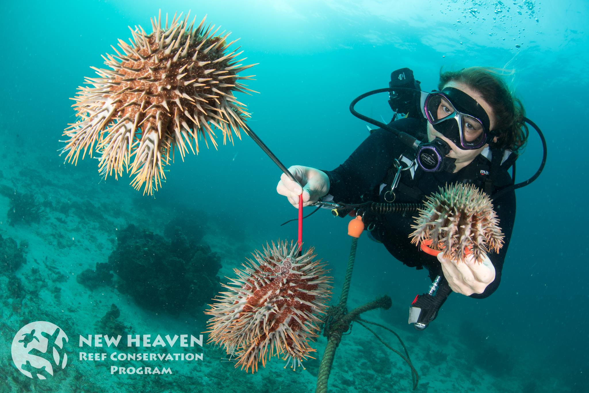 Kirsty Collecting Crown of Thorns Starfish
