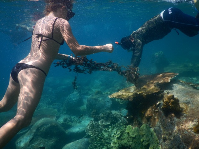 Kristen removing ghost net from a coral. (Photo: Kristen McNamara)