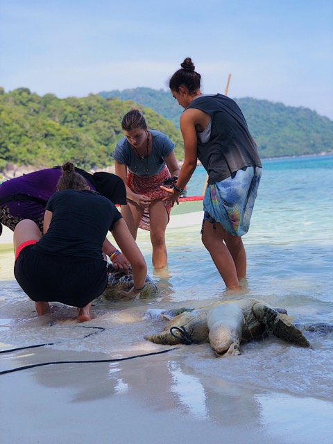Kristen and her (all girl) team attending to two dead turtles who had been hit by speedboats and killed. Part of her work involved identifying the dead turtles and keeping track of the mortality rate killed by boat strike throughout the year. (Photo: Kristen McNamara)