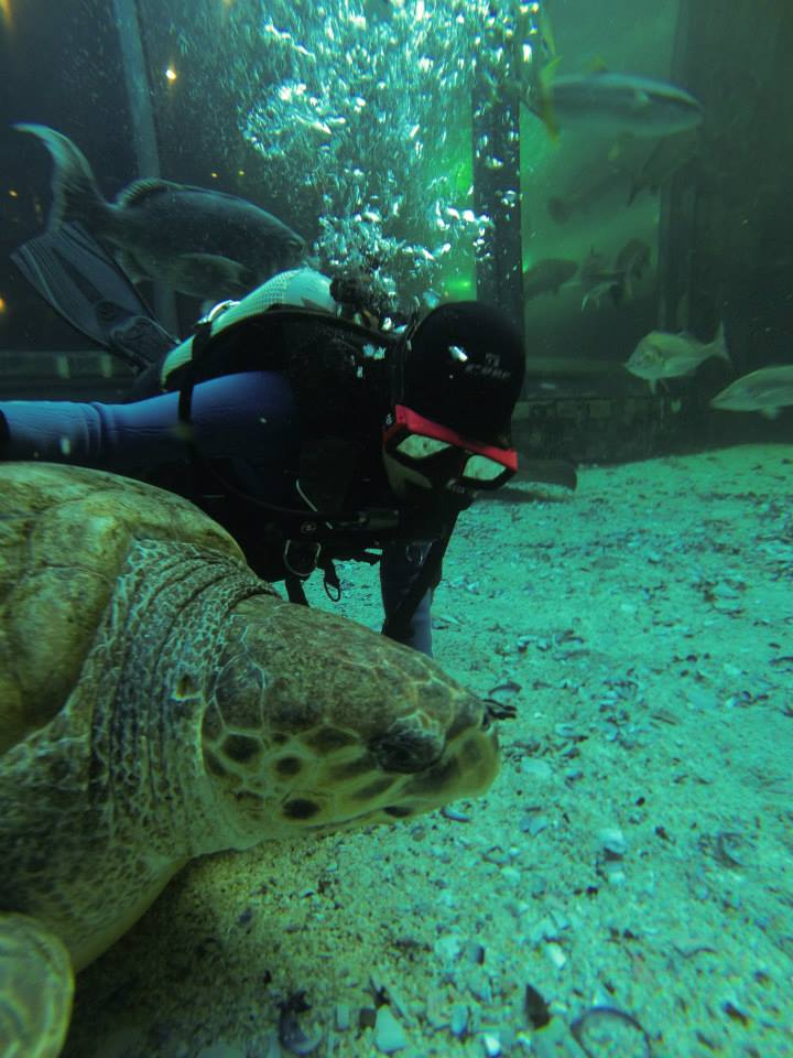 Diving at the Two Oceans Aquarium, Cape Town, with Yoshi, an ex-resident green turtle ( Chelonia mydas ) in 2014