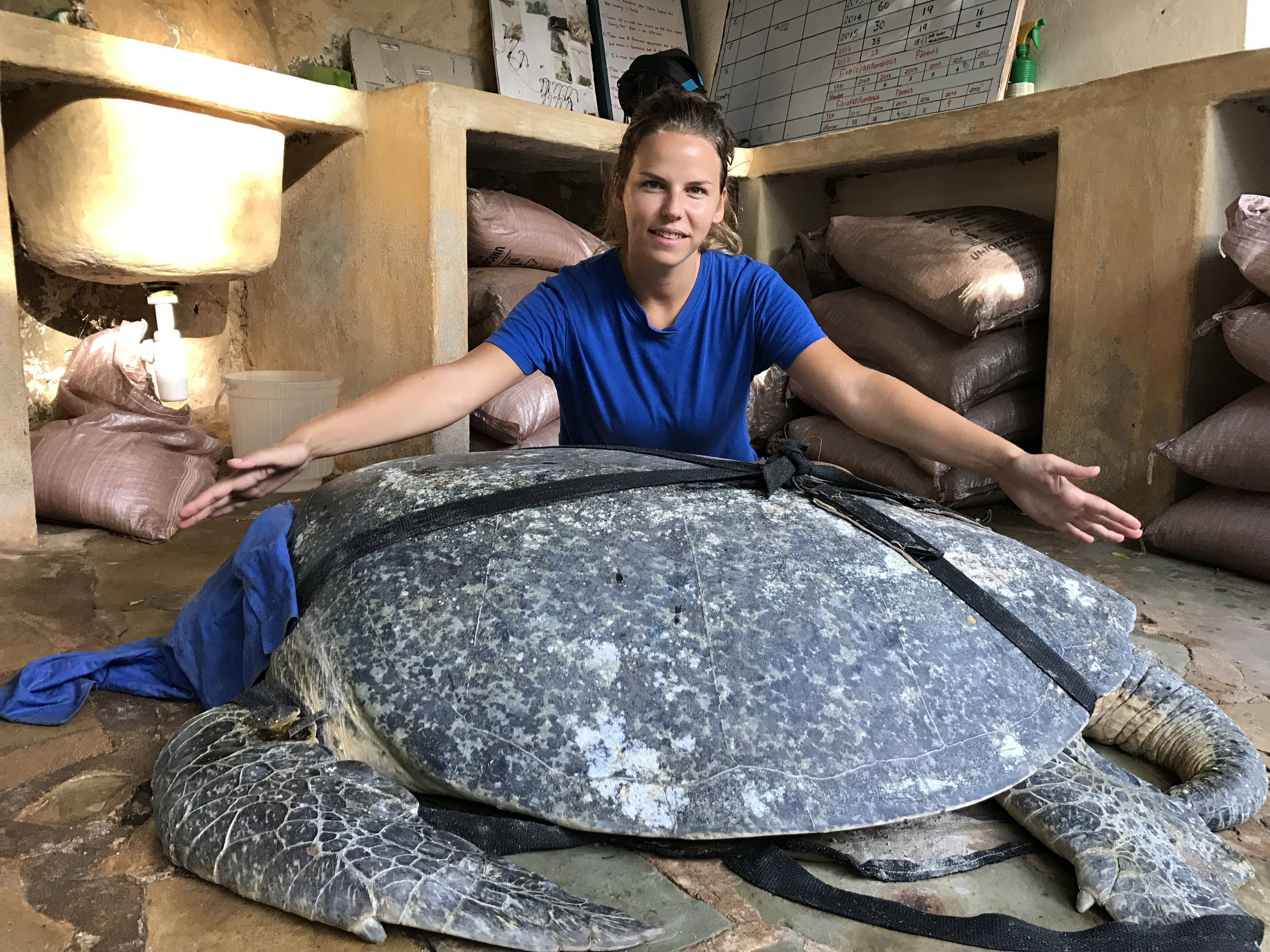 With a 140 kg male green turtle in the WTW rehabilitation centre in Kenya.JPG