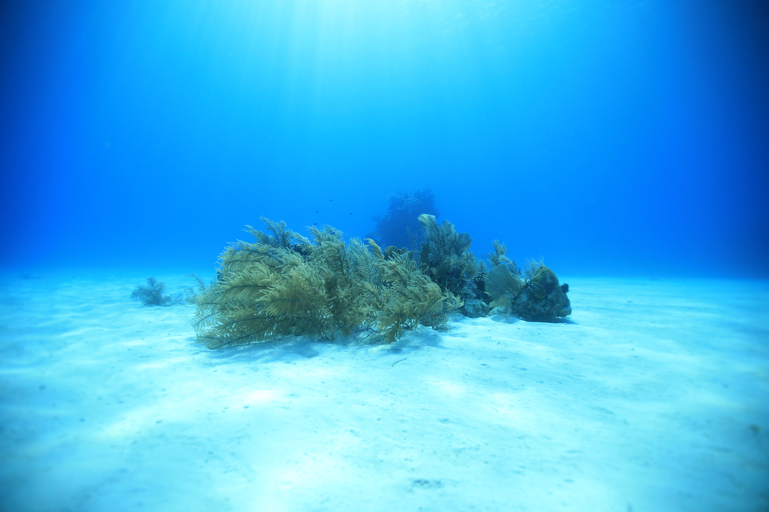 Let's talk about reef-safe products. - Those of us who spend time in the sun often rely heavily on sunscreen to protect against UV rays. Have you stopped to think what are the ingredients? What are these products doing to our environment? What can you do to help?