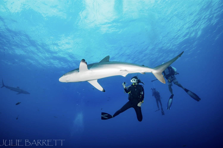 Katy with a silky shark