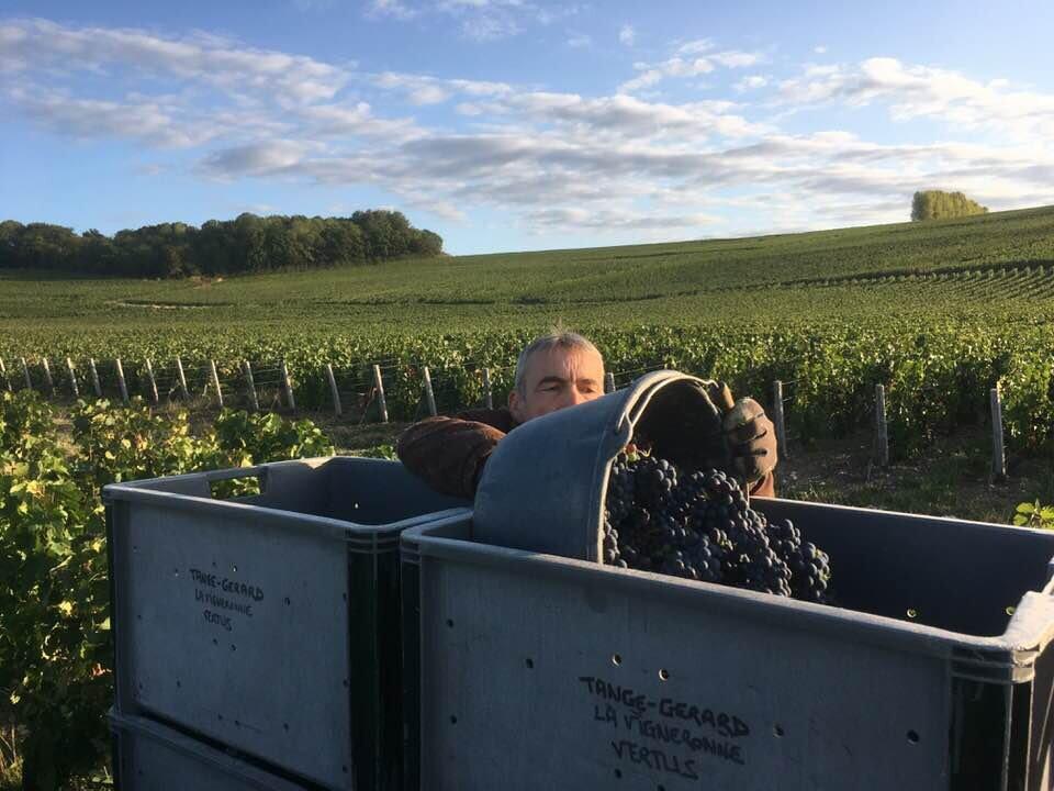 Première journée des vendanges : Alain Gérard avec un seau des belles Pinots Meunier à Loisy-en-Brie.